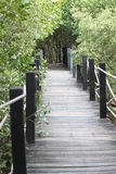 Mangrove forest wooden walkway. Royalty Free Stock Photo