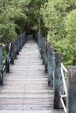 Mangrove forest wooden walkway. Royalty Free Stock Images