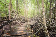 Wooden walkway in forest. In the mangrove forest with a wooden walkway Royalty Free Stock Images