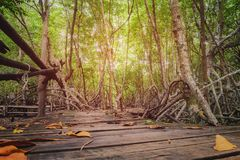 Wooden walkway in forest. In the mangrove forest with a wooden walkway Royalty Free Stock Photos