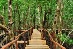 Mangrove forest in Zanzibar Stock Photography