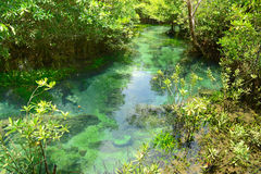 Mangrove Forests Royalty Free Stock Photos
