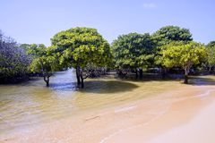 Mangrove forests, Lembongan, Indonesia Royalty Free Stock Image