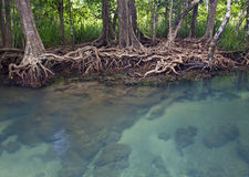 Mangrove forests with river Royalty Free Stock Images