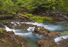 Mangrove forests with river Stock Photography