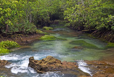 Mangrove forests with river Royalty Free Stock Photography