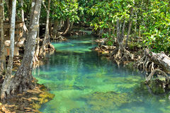 Mangrove forests Royalty Free Stock Photography