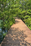 Mangrove forests Stock Photo