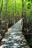 The Mangrove Forests Stock Photos
