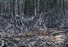 Mangrove forrest Lizenzfreies Stockfoto