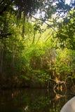 Mangrove forsten auf Lizenzfreies Stockfoto