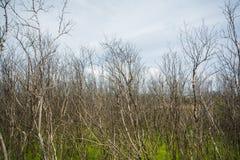 Mangrove forsten auf Stockfoto