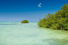 Mangrove green forest in a blue ocean in summer Stock Images