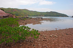 Mangrove with Hills and Bay Stock Image