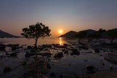 Mangrove in Hong Kong Royalty Free Stock Image
