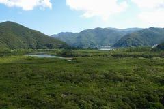Mangrove i Japan Arkivbild