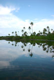 Mangrove im Addu Atoll hithadhoo (Maldives) Stockfotografie