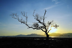 Mangrove im Sonnenuntergang Lizenzfreie Stockbilder