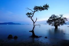 Free Mangrove In Sunset Royalty Free Stock Image - 27929746