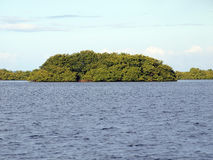 Mangrove island Royalty Free Stock Images