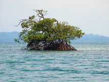 Mangrove island in Panama Stock Photo