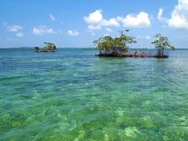 Mangrove islands Royalty Free Stock Photos