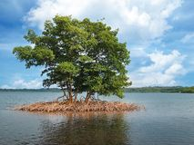 Mangrove islet in the archipelago of Bocas del Toro Stock Photo