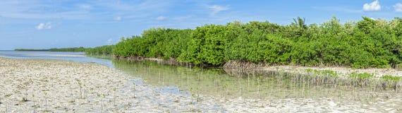 Mangrove lagoon panoramic stock image