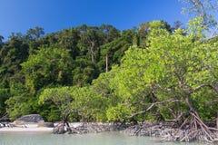 Mangrove met overzees en hemel Stock Afbeeldingen