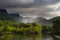 Mangrove Morning. A beautiful misty morning in Langkawi Royalty Free Stock Images