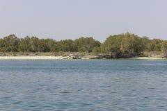 mangrove nationaal park Abu Dhabi Royalty-vrije Stock Foto