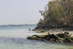 mangrove nationaal park Abu Dhabi Stock Afbeelding