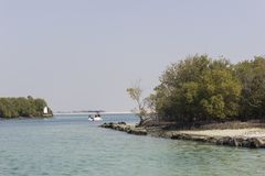 mangrove nationaal park Abu Dhabi Royalty-vrije Stock Fotografie