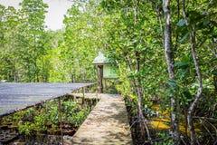 Mangrove nursery. Stock Photos