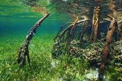Mangrove onderwater met het overzeese leven in de wortels stock fotografie