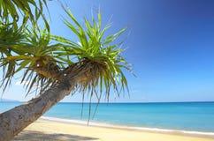 Mangrove op strand stock afbeeldingen