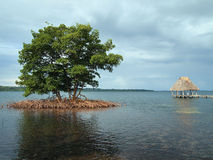 Mangrove and palapa Royalty Free Stock Photography
