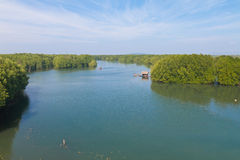 Mangrove park Stock Photography