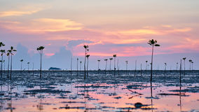 Mangrove and pink sunset Royalty Free Stock Photo