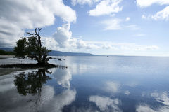 Mangrove reflections siquijor island philippines Stock Photography