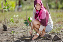 Mangrove reforestation Royalty Free Stock Photography