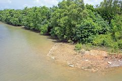 Mangrove River bank. With small spur located in the tropics stock photo