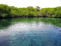 Mangrove river in central america mexico Stock Photos