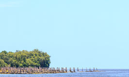 Mangrove at the river estuary Stock Images