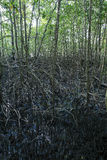 Mangrove Stock Photos