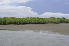 Mangrove sea in sunny day. With plenty of rocks for coastal erosion protection ,some egret birds hunting fishes stock images