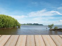 Mangrove seashore under blue sky in Thailand Stock Photos