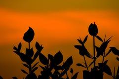 Mangrove Stock Photography
