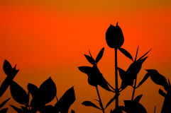 Mangrove Royalty Free Stock Photography