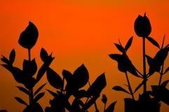 Mangrove Stock Image